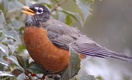 Paskamansett Bird Club Meeting