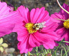Pollinators are important, and you can help them