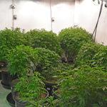 Marijuana Meeting
