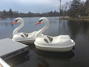Swan paddleboats