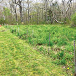 Firefly habitat on West Island gets help from students
