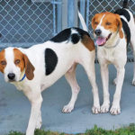 Fairhaven ACO seeks help with two sick dogs